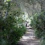 a walk about fairy wood - Mediterranean autumn forest Poster