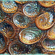 Abalones Poster