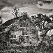Abandoned Barn 2 Poster by Brenda Bryant