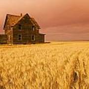 Abandoned Farm House, Wind-blown Durum Poster
