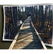 Abbotts Nature Trail Poster