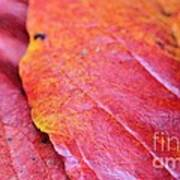 Abstract Dogwood In Autumn Poster