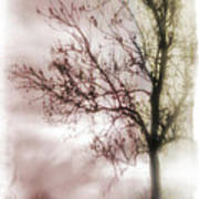 Abstract Fall Trees Poster