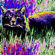 Abstract Of Tabby Poster