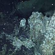 Active Hydrothermal Vent Poster