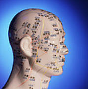 Acupuncture Chart On A Cast Of A Head And Neck Poster