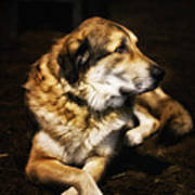 Adam - The Loving Dog Poster by Bill Tiepelman