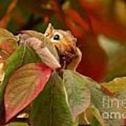Adorable Chipmunk Hiding In Autumn Leaves Poster