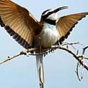 African Bee Eater Poster