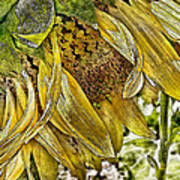 Afternoon Sunflower Poster