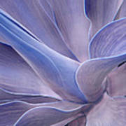 Agave Abstract In Lilac Poster