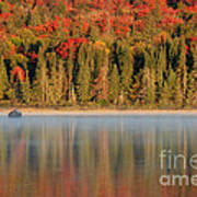 Algonquin Reflections Poster by Chris Hill