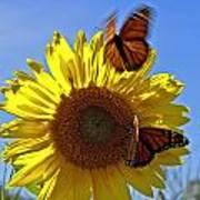 All A Flutter Poster