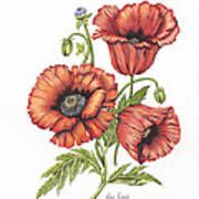 All About Poppies Poster