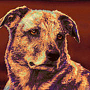 All American Mutt 2 Poster