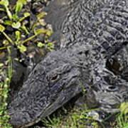 Alligator Alley Friend  Poster
