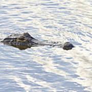 Alligator With Sky Reflections Poster