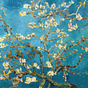 Almond Tree Poster
