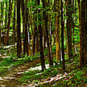 Along The Hiking Trail Poster