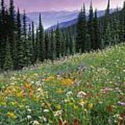 Alpine Wildflower Meadow, Mount Poster