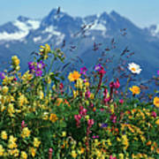 Alpine Wildflowers Poster