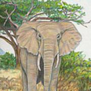 Amboseli Elephant Poster