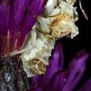 Ambush Bug On Ironweed Poster