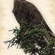 American Bald Eagle In Tree Poster