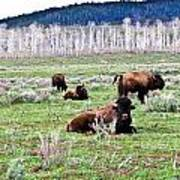 American Buffalo 16 Poster