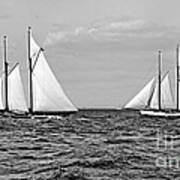 America's Cup Contenders Idler And Hildegarde 1901 Bw Poster by Padre Art
