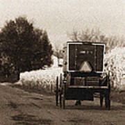 Amish Buggy And Wagon Poster