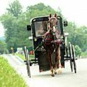 Amish Buggy On The Road Poster