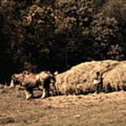 Amish Hay Wagon Poster by Tom Mc Nemar