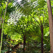 Among The Tree Ferns Poster
