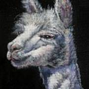 Amorous Alpaca Poster