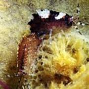 Amphipods On A Sponge Poster