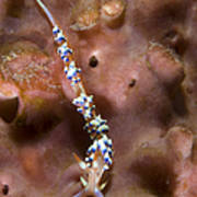 An Aeolid Nudibranch On An Orange Poster