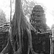 Ancient Temple With Strangler Fig Poster