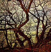 Ancient Winter Tree Poster