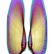 Angel Wing Shell, X-ray Poster