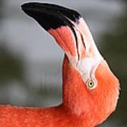 Angle Of A Flamingo Side B Poster