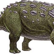 Ankylosaurus Magniventris Poster