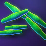 Anthrax Bacteria Poster