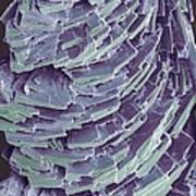 Antihistamine Drug Crystals, Sem Poster