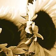 Antique Petals Poster