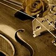 Antique Violin Viola Poster