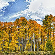 Apen Trees In Fall Poster