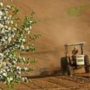 Apple Blossoms And Farmer On Tractor Poster