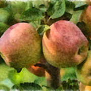Apples Painterly Poster