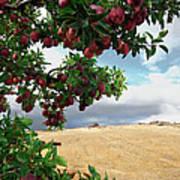 Applessence Poster